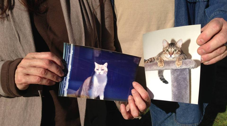 A picture of Pumpkin, a cat owned by John Noel, a deputy sheriff for Los Angeles County. And the donor cat that gave Pumpkin a kidney.