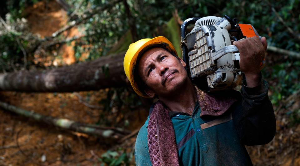 This photo taken on November 13, 2013 shows a timber company worker carrying a chainsaw in the forests of Berau, East Kalimantan, in Indonesia. A new app looks to use cellphones to detect illegal loggers.