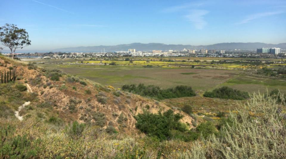 The view north from a bluff in Westchester down to the Ballona Wetlands, which is surrounded by dense residential and commercial development, crucial roadways, and a drainage channel to the Pacific Ocean several miles to the west. Los Angeles International Airport is nearby, as are active oil fields and the largest yacht marina on the West Coast.