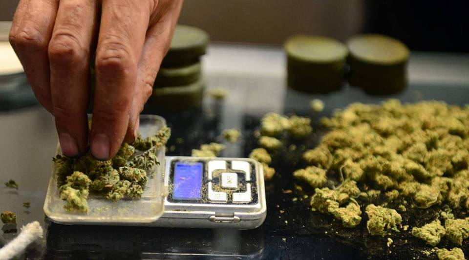 A vendor weighs buds for card-carrying medical marijuana patients attending Los Angeles' first-ever cannabis farmer's market at the West Coast Collective medical marijuana dispensary, on Independence Day 2014.