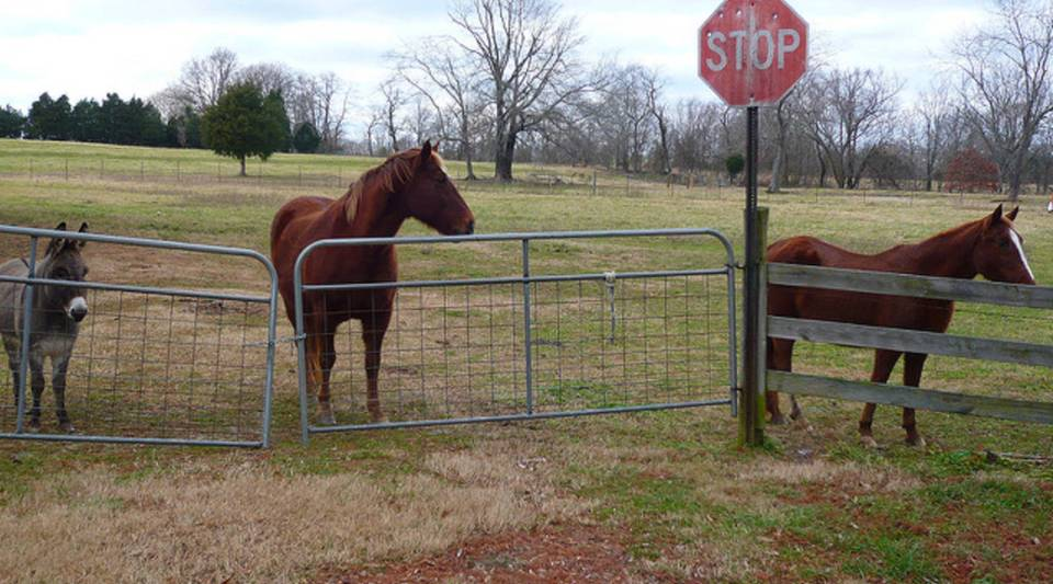 Horses on a farm in Tennessee.