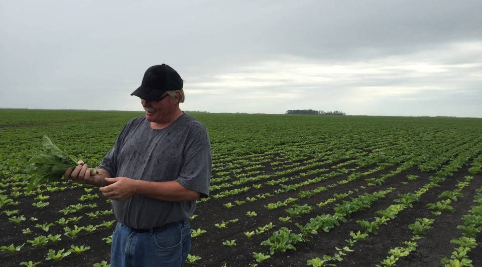 Duck (Daniel) Younggren in one of his sugar beet fields in Hallock, Minn. His family has been growing sugar beets there since 1965 and started using genetically modified seeds nearly a decade ago.