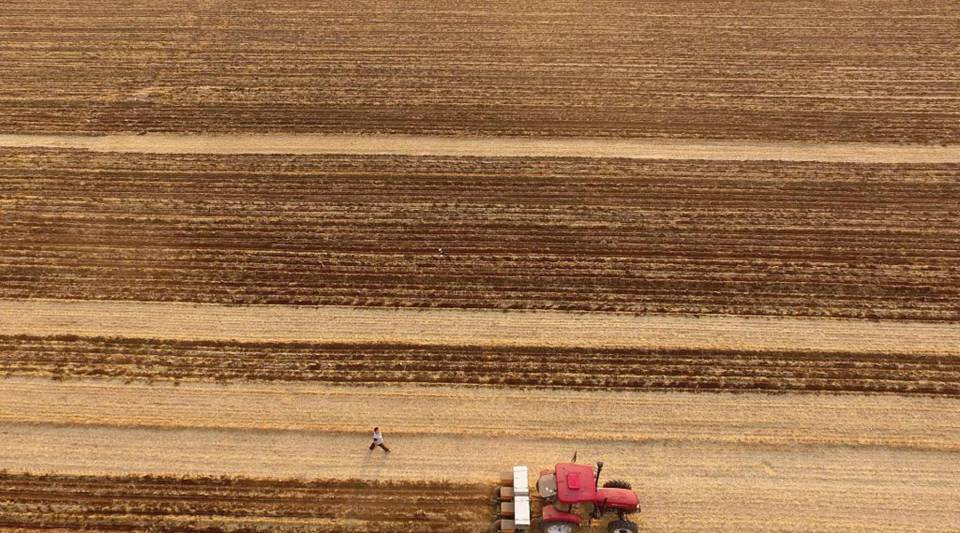 Farmers sow corn seeds with a grain drill at a field in Chiping County, in east China's Shandong province.