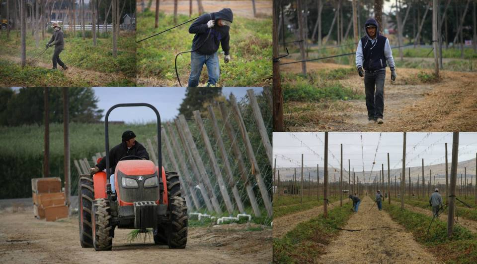 Migrant workers in Central Washington.