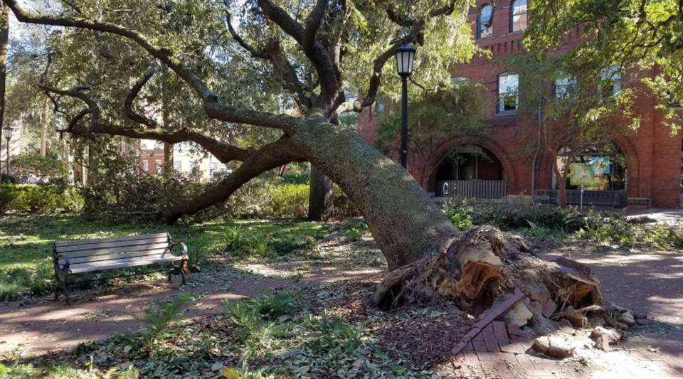 Hurricane Matthew uprooted or damaged many trees in Coastal Georgia, including some in Savannah's famous historic squares.