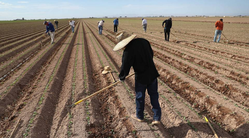 California farmers face such tight labor pools that some are replacing grapes with almonds, which require much less human labor.