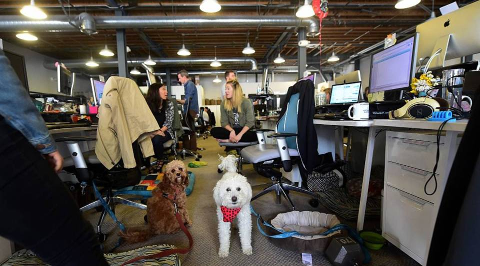Dogs share the aisle with employees at DogVacay's offices in Santa Monica, California. Employees of the company, known as an Airbnb for canines, share office space with their own and others' dogs.