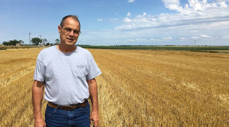 Tom Giessel is a Kansas wheat farmer who harvested 1,800 acres of wheat in late June. He stands here in his field near Larned, Kansas.
