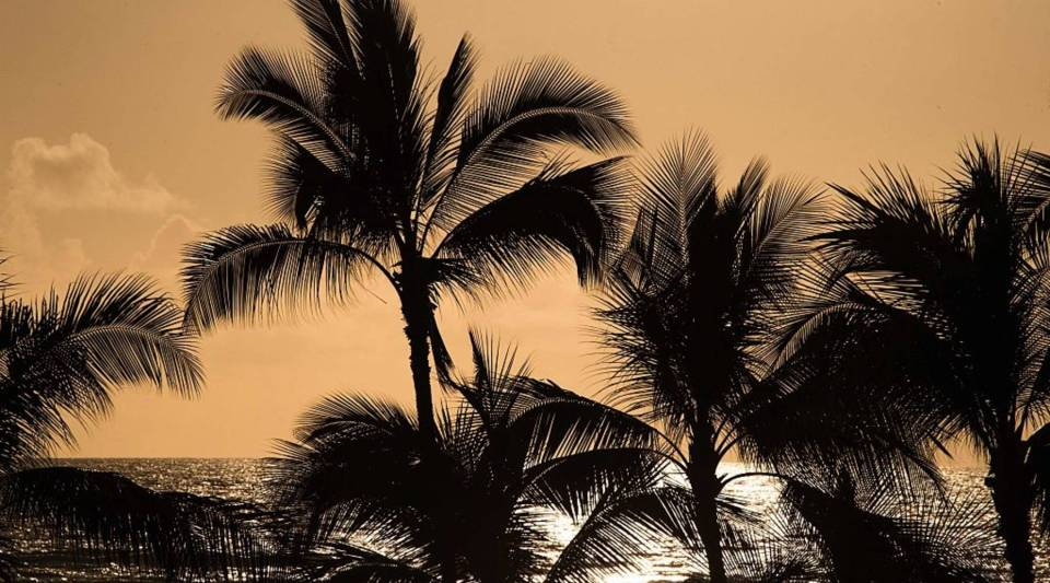 Palm trees are silhouetted before the sunset sky at Waikiki beach in Honolulu, Hawaii.