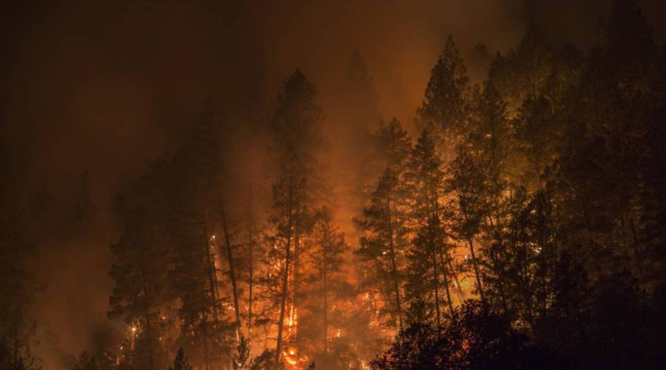Wildfire burns through a forest west of Napa, California, on Oct. 12, 2017.