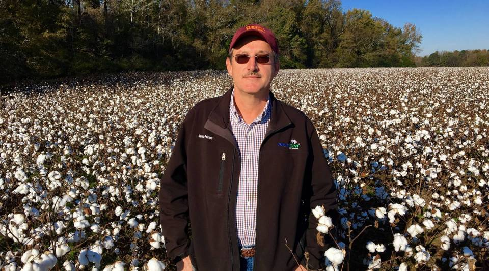 NC Cotton Farmer David Dunlow in one of his fields.