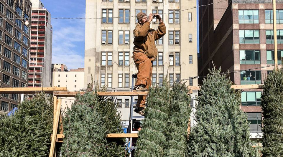 Danny Abbott hangs lights for the night crew at Soho Trees in New York City.