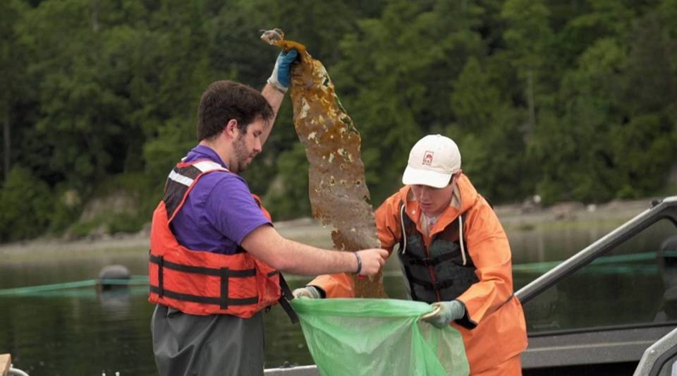 Stephen Schreck, left, and Ryan Cox of Puget Sound Restoration Fund collect kelp samples.