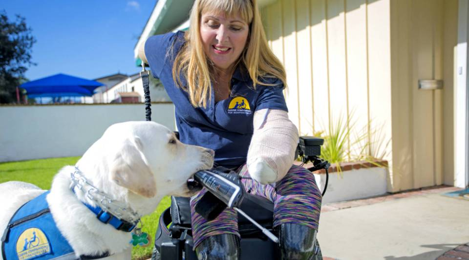 Patch, a service dog, picks up an arm strap with a stylus for his owner Annette Ramirez.