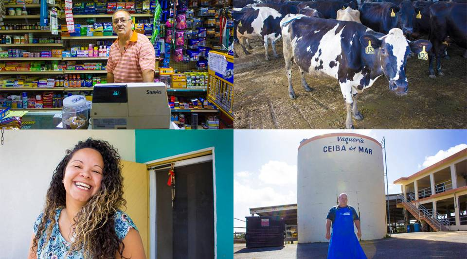 Clockwise from top left: Juan Orta says he's spent $75,000 of his own money to reopen his convenience store in Toa Baja, Puerto Rico; Cows at Vaqueria Ceiba del Mar in Hatillo, Puerto Rico; Luis Martinez, owner of Ceiba del Mar; Glorimar Rivera who lives on a street that was once covered in power lines and fallen poles.