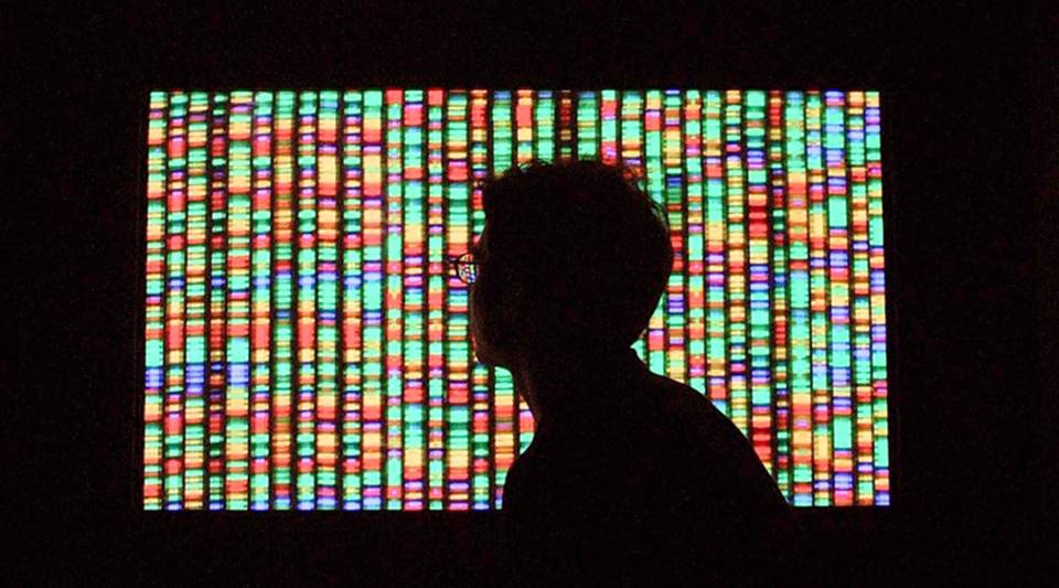 A visitor views a digital representation of the human genome in 2001 at the American Museum of Natural History in New York City.