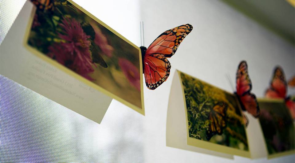 The three southern-most counties of Texas are home to more than 300 butterfly species. The National Butterfly Center in Mission, TX is holding out hope that a border wall won't be built on its property.
