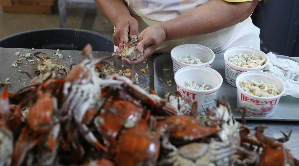 A woman picks crabs at the W.T. Ruark Seafood Co., on May 17, 2018 in Hoopers Island, Maryland.