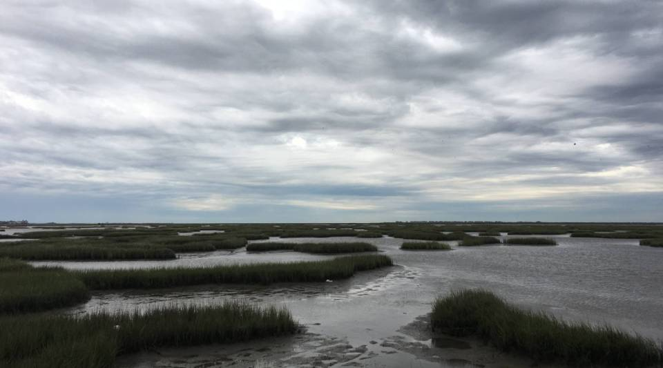 Texas Coastal Exchange says preserving coastal marshland could be key to battling climate change.