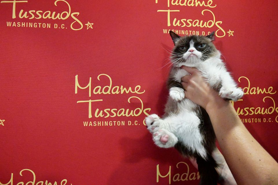 """Internet phenomenon Grumpy Cat brings her iconic """"No Face"""" to Madame Tussauds Washington, DC for a meet-and-greet with fans at Madame Tussauds on September 28, 2016 in Washington, DC. The iconic cat passed away Friday."""
