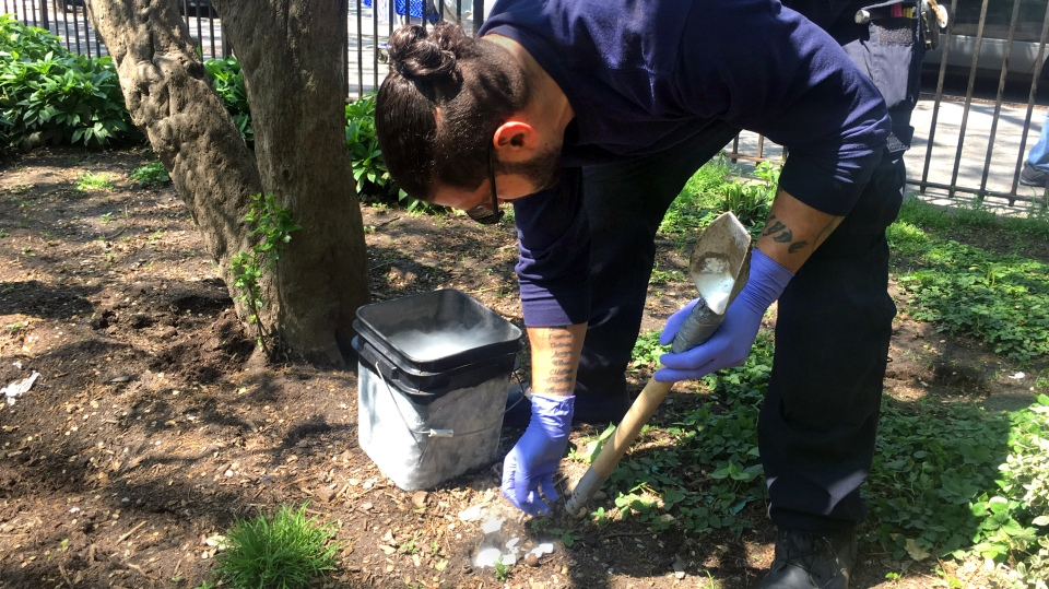 New York City exterminator Joseph Rodriguez drops dry ice pellets into a rat burrow. The dry ice turns into a gas, essentially suffocating the rats with carbon dioxide.