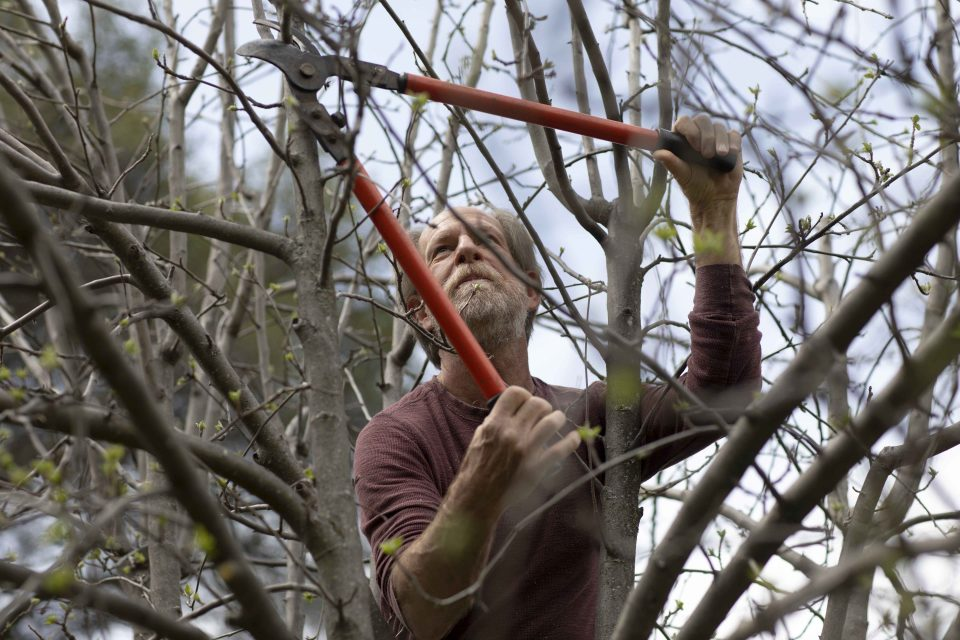 Alan Haight, 62, prunes apple trees at Riverhill Farm in Nevada City.