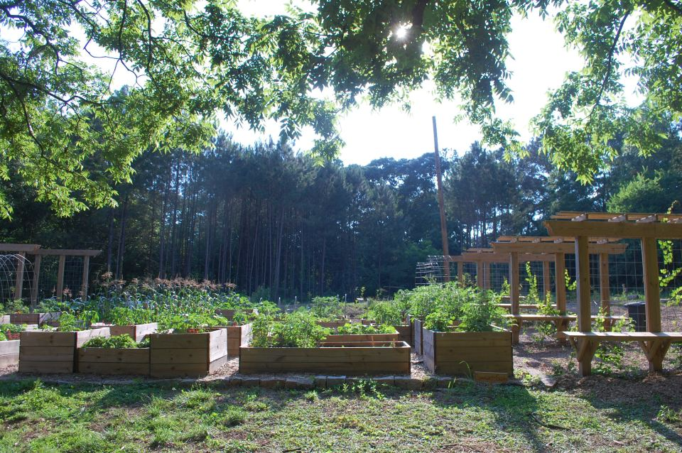From the garden out front to the trees in the back, Atlanta's new 7.1-acre food forest is full of fresh fruit and vegetables.