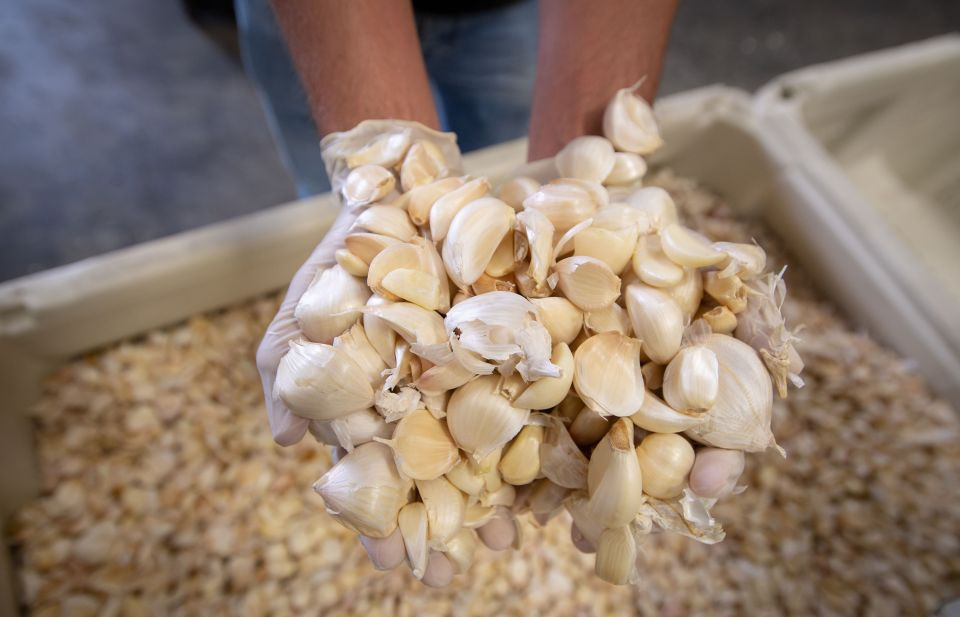 Executive Vice President Ken Christopher holds garlic cloves at Christopher Ranch in Gilroy, California.