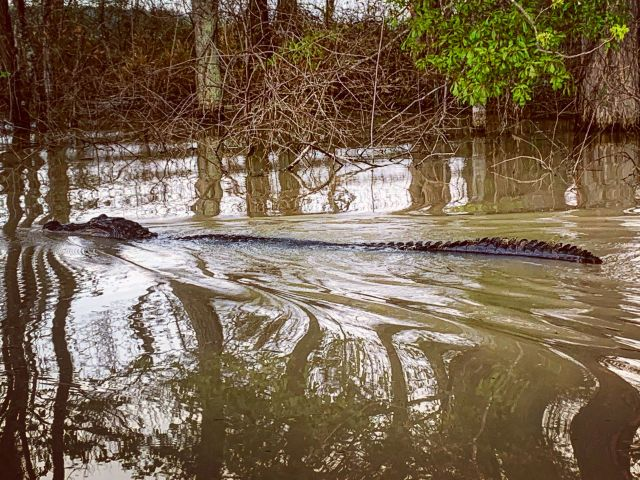 Victoria Darden has seen alligators and snakes infest the waters drowning her farmland.