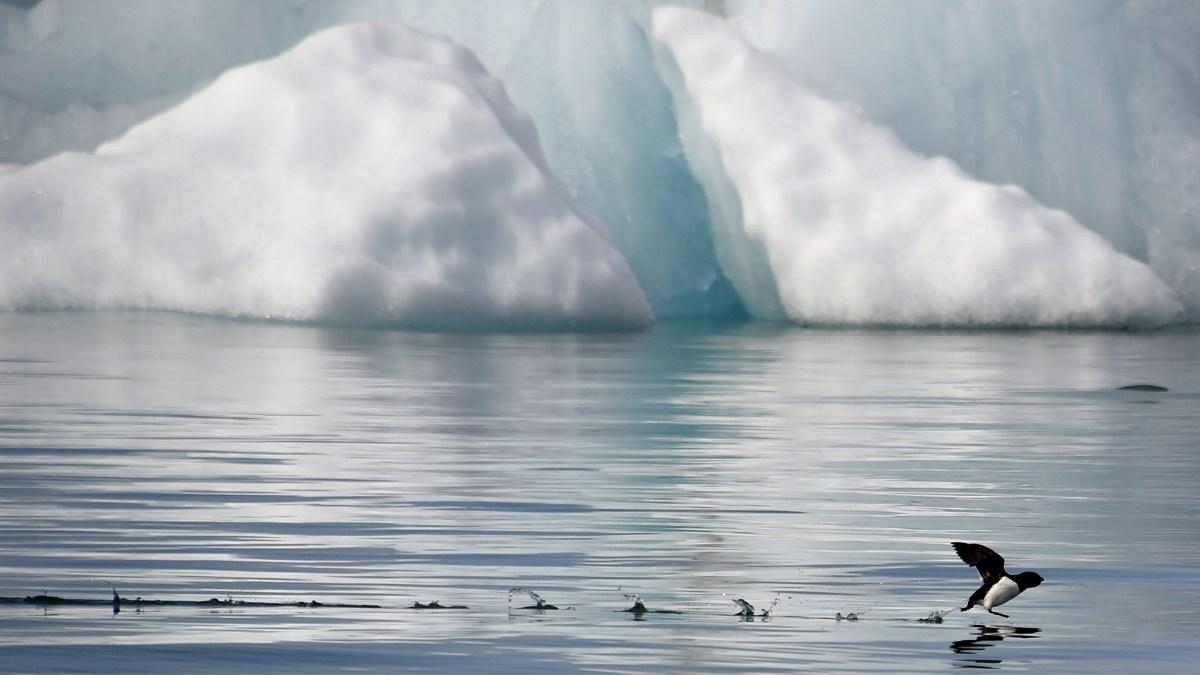 The Arctic moneys