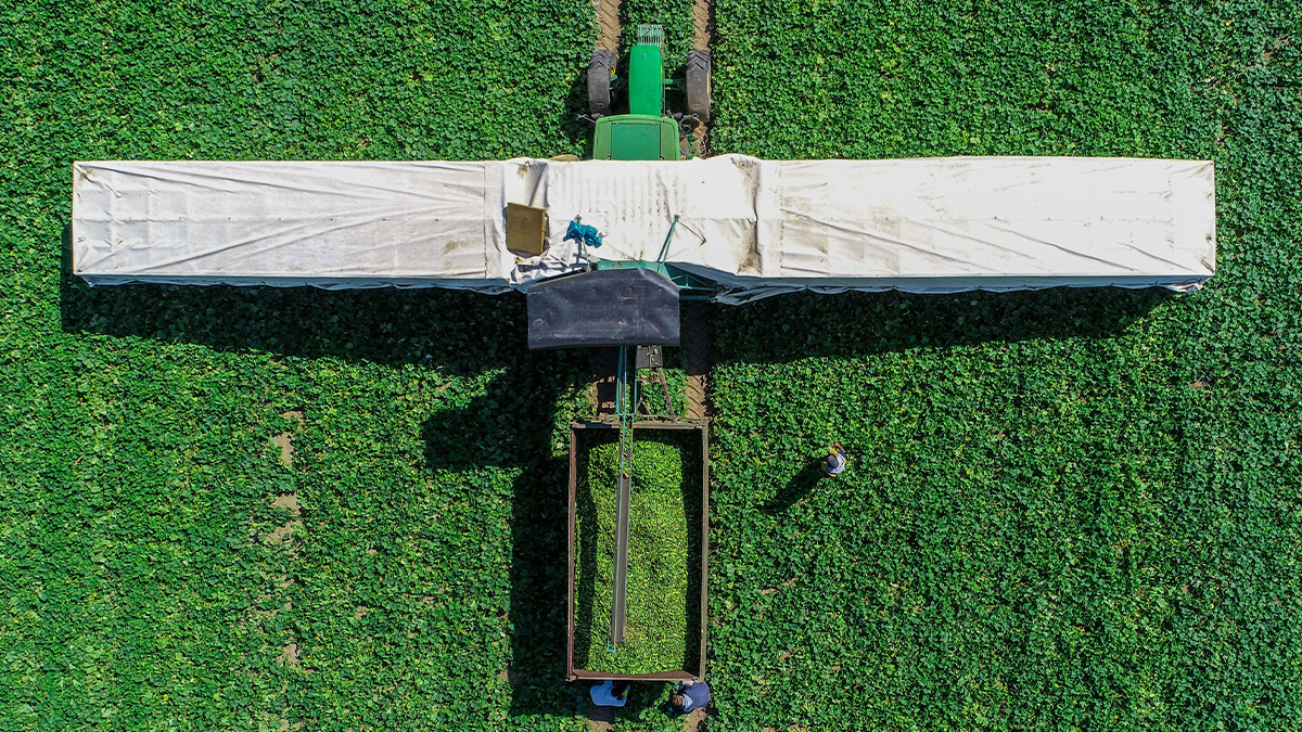 How photos taken from the sky are helping farmers