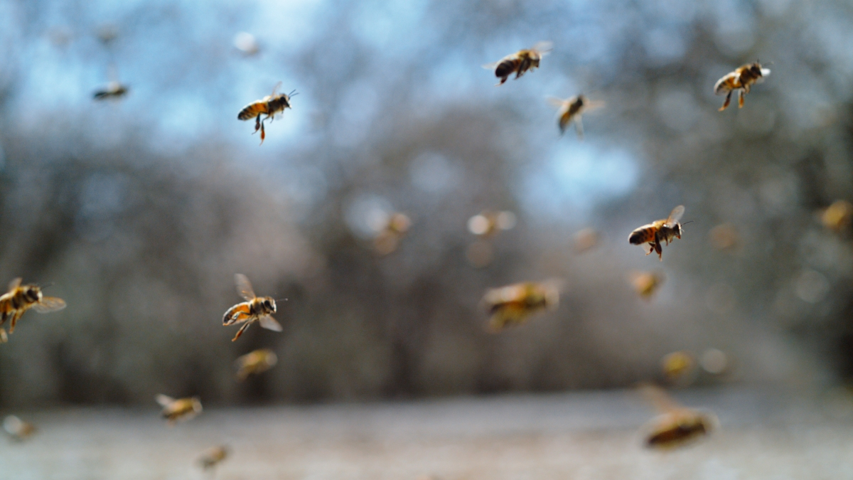 A tack of the trucker bees