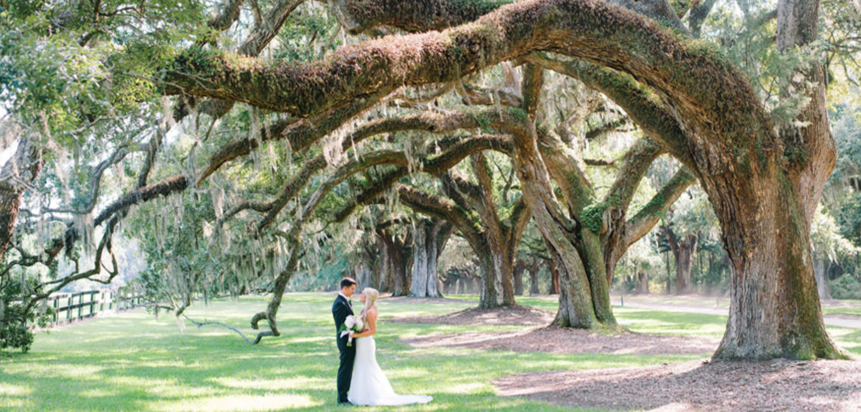 A photo from a wedding at Boone Hall Plantation and Gardens in South Carolina.