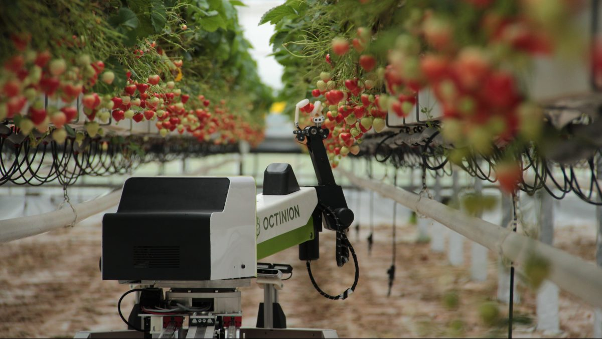 Could fruit-picking robots solve the labor shortage on British farms?