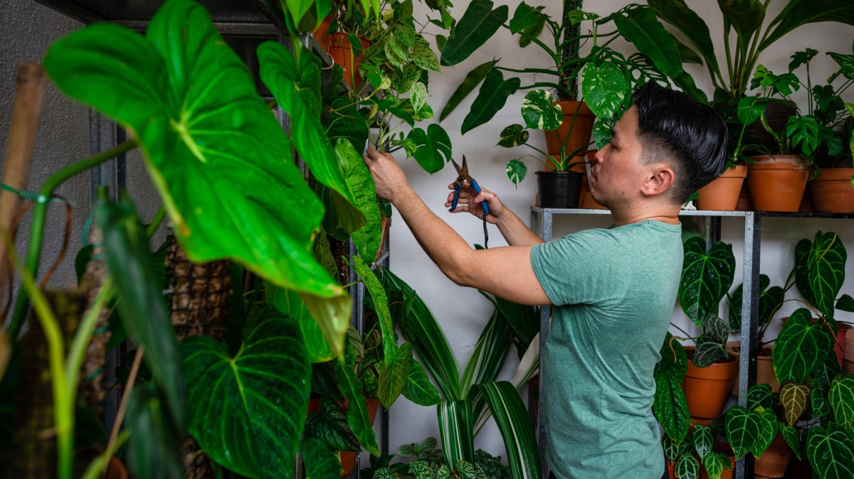 Will obsession for houseplants continue as COVID recedes? - Marketplace